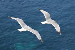 El volar de las gaviotas imagenes de archivo