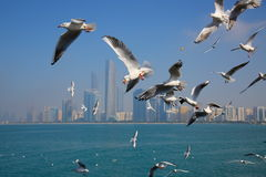 El volar de las gaviotas Fotografía de archivo