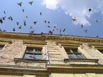 El volar de las palomas Imágenes de archivo libres de regalías