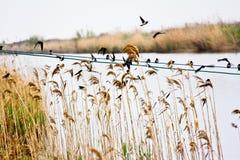 El volar de los pájaros Foto de archivo