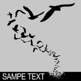El volar de los pájaros Imagen de archivo libre de regalías