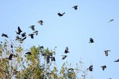 El volar de los pájaros Imagenes de archivo
