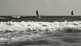El volar de los pájaros Fotos de archivo libres de regalías