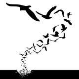 El volar de los pájaros Imagen de archivo