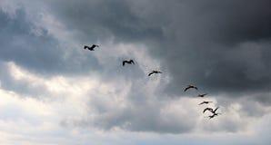 El volar de varios pájaros Imagenes de archivo
