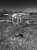 El volar del abejón blanco y negro Fotos de archivo