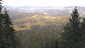 El volar en abejón a través del bosque salvaje en montañas cárpatas almacen de video