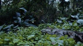 El volar en el bosque sobre la tierra almacen de metraje de vídeo