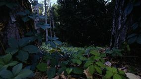 El volar en el bosque sobre la tierra almacen de video