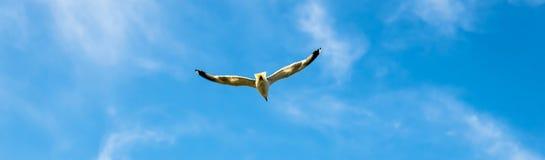 El volar en el azul Foto de archivo libre de regalías
