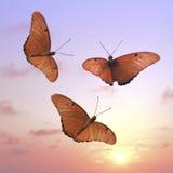 El volar en la puesta del sol imagen de archivo libre de regalías