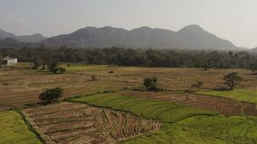El volar en un abejón sobre las montañas con las plantaciones de té metrajes