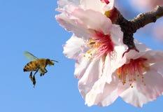 El volar a la miel Fotografía de archivo libre de regalías