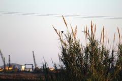 El volar libre de los pájaros Imagen de archivo