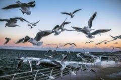 El volar libremente foto de archivo libre de regalías