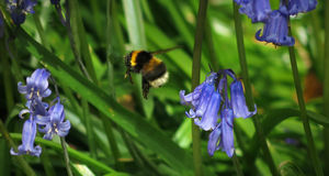 El volar manosea la abeja Imagen de archivo libre de regalías