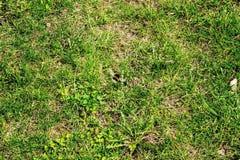 El volar manosea la abeja sobre hierba Imagen de archivo