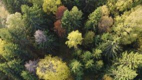 El volar rápidamente directamente sobre bosque colorido del otoño almacen de metraje de vídeo