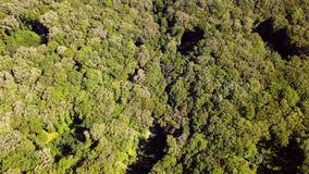 El volar sobre bosque sin fin en los Balcanes metrajes