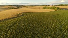 El volar sobre campo orgánico de la cebada en la granja grande almacen de metraje de vídeo