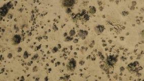 El volar sobre el desierto sobre las yucas y los arbustos almacen de video