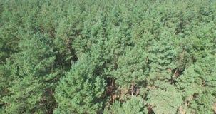 El volar sobre el bosque conífero verde metrajes