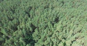 El volar sobre el bosque conífero verde almacen de video