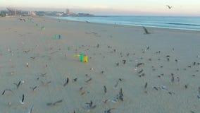 El volar sobre gaviotas en la costa atlántica en Oporto almacen de video