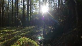 El volar sobre musgo e hierba en el bosque profundo en llamarada soleada de la lente de la luz del sol de los haces almacen de metraje de vídeo