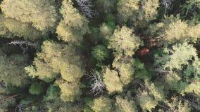 El volar sobre el taiga siberiano en la reserva natural Stolby almacen de video