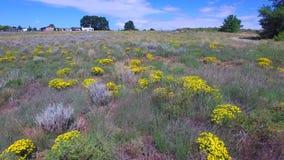El volar sobre un campo de flores amarillas almacen de video