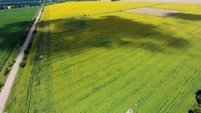 El volar sobre un campo grande en un día de verano brillante almacen de video