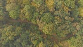 El volar sobre un carril del país en bosque del otoño metrajes