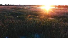El volar sobre un lago hermoso Puesta del sol sobre el lago Matorrales de Reed Pájaros que vuelan al sol en la puesta del sol Igl metrajes