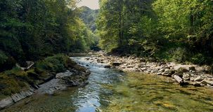 El volar sobre un río entre los árboles metrajes
