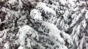 El volar a través de bosque del pino almacen de metraje de vídeo