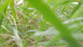 El volar a través de la hierba