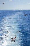 El volar y naves de las gaviotas Fotos de archivo