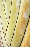 El vástago de una planta tropical Fotos de archivo