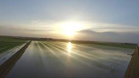 El vuelo al cielo hermoso en el arroz coloca almacen de metraje de vídeo