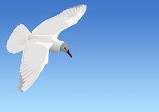 El vuelo de la gaviota Fotos de archivo