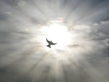 El vuelo de la paloma de la paz del Espíritu Santo de Pascua a través del cielo abierto se nubla con los rayos del sol