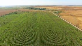 El vuelo sobre campos con diversa cosecha agrícola mecanografía, vídeo aéreo almacen de metraje de vídeo