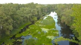 El vuelo sobre el río demasiado grande para su edad con la hierba, Ucrania rodeó por los árboles - el grabar aéreo almacen de video