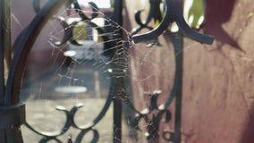 El web blanco estiró entre las barras de la cerca vieja del metal, en el patio de la luz de la puesta del sol almacen de metraje de vídeo