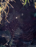 El web de araña con el fondo blury Fotos de archivo