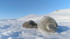 El weddell antártico sella la cara linda del primer almacen de metraje de vídeo