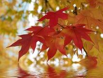 El yeallow rojo del otoño hermoso sale de la reflexión Fotos de archivo libres de regalías