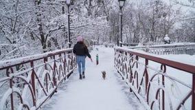 El yorkie divertido camina en el correo con el dueño en el puente Pequeño terrier de Yorkshire que corre con la muchacha en un in metrajes