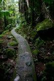 El Yunque国家森林足迹 库存图片